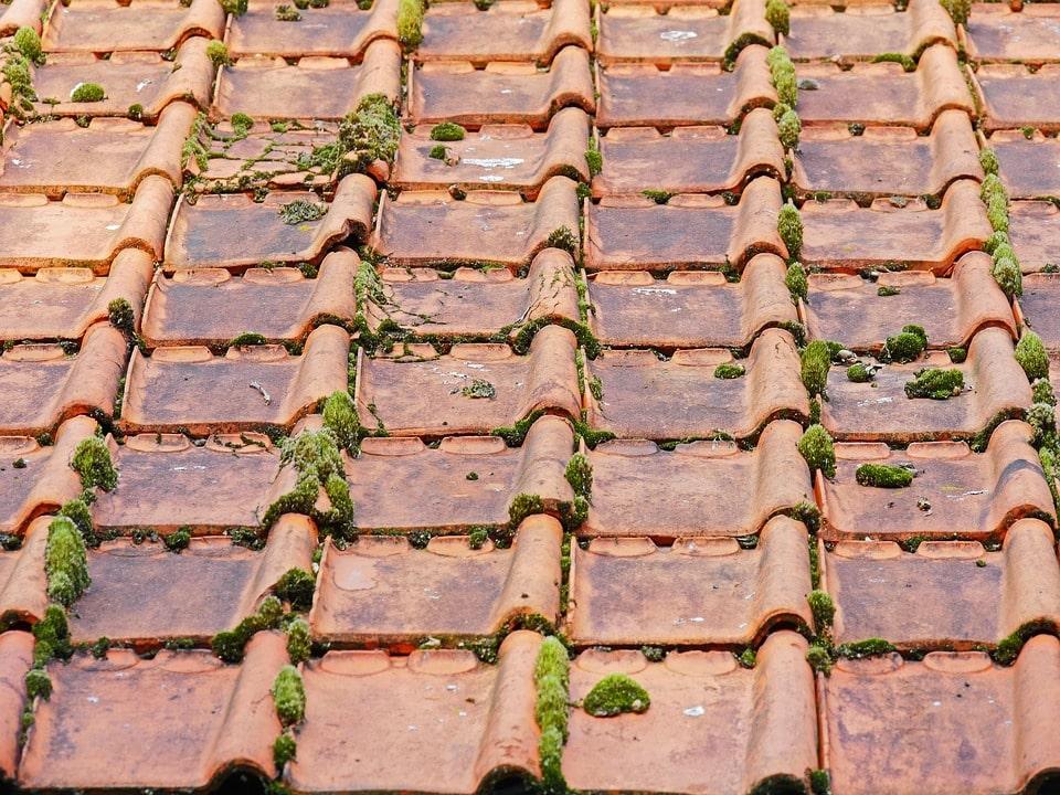travaux toiture mousse-min