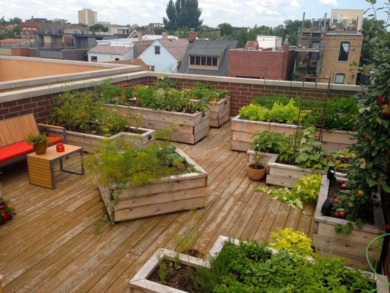 terrasse potager sur toit